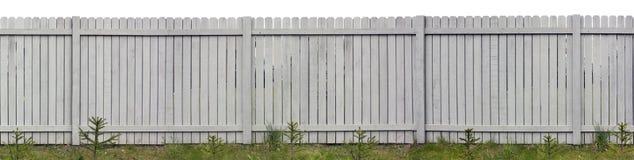 Ungt staket för granträd och grå färg Royaltyfri Foto