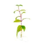 Ungt trädplantan med synligt rotar mot Arkivfoto