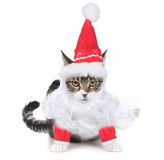 Unhappy Bah Humbug Santa Kitten Glaring at the Vie Royalty Free Stock Image
