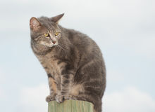 Unhappy blue tabby cat looking worried Royalty Free Stock Photos