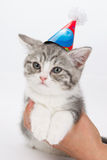 Unhappy with cat with festive cap on his head in  man's hand. Stock Photo
