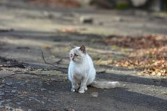 Unhappy cats live on the streets, looking for food royalty free stock photography