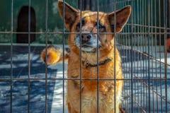 A sad dog looks through the fence