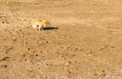 Unhappy dog alone on the beach Stock Photo