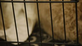 Unhappy dog sitting in cage at pet shelter, lonely animal waiting for adoption. Stock footage stock video