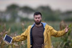 Unhappy farmer in corn field stock photos