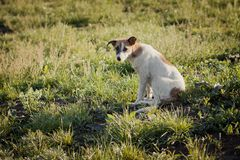 Unhappy homeless dog on the grass. Summer and dog royalty free stock images
