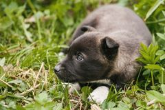 Unhappy homeless dog that lives underground. Dog in garden stock photos