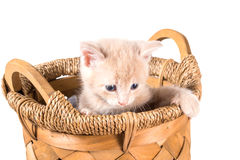 Unhappy peach color kitten in a basket Royalty Free Stock Images