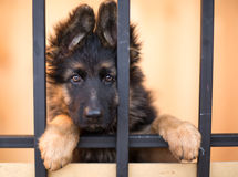 Unhappy puppy in shelter Stock Photos