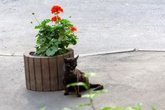 Unhappy sick black cat sitting near a flower bed. Homeless animals.  royalty free stock photos