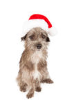 Unhappy terrier mixed breed wearing Santa hat Royalty Free Stock Photos