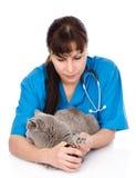 Unhas do pé do gato do corte do veterinário Isolado no fundo branco Fotos de Stock