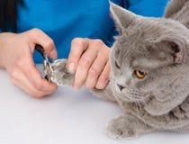 Unhas do pé do gato do corte do veterinário No fundo branco Imagem de Stock Royalty Free