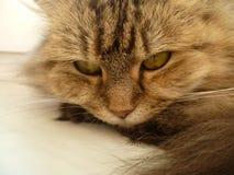 Unheimliche Blicke der schlechten Katze stockbild
