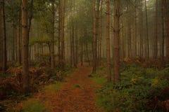Unheimliches Waldland Stockbild