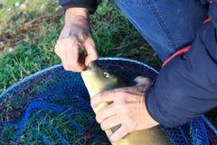 Unhook a fish Stock Photos