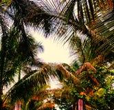 Unión de los árboles de coco en la puesta del sol foto de archivo