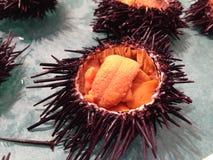 Uni ovo fresco do diabrete no mercado de peixes de japão Imagem de Stock