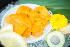 Uni sashimi Royaltyfria Bilder