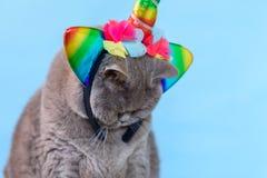 Unic?rnio brit?nico bonito do gato de Shorthair do retrato no fundo azul imagem de stock royalty free