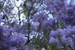 Unicité en fleurs Image libre de droits