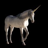 Unicorn stock illustration