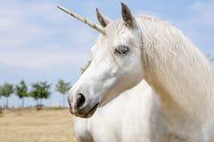 unicorn Immagini Stock