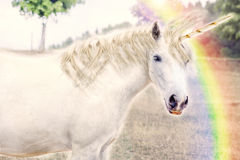 unicorn Imagem de Stock Royalty Free