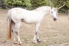 unicorn Royaltyfri Foto