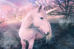Unicorn. Beautiful unicorn in the wild Royalty Free Stock Photo