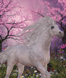 Unicorn Cherry Blossom Glen Stock Photos