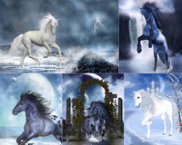 Unicorn collage. A Collage of dreamy unicorn and wildhorse images Stock Image
