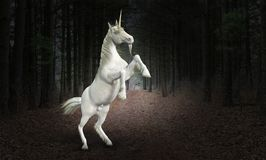 Unicorn Horse, Nature, Wildlife, Forest. A unicorn horse rears up in a surreal deep dark forest. The mystical animal beast is wildlife in nature. Abstract stock photography