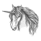 Unicorn mythic horse with horn vector sketch. Unicorn head sketch. Mythic fantasy equine creature. Heraldic mustang head with long horn and wavy mane. Vector vector illustration