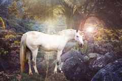 Unicorn. In nature ealistic photography royalty free stock photos