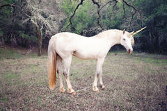 Unicorn photo realistic. Unicorn in the forest photo realistic royalty free stock image