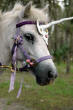 Unicorn pony. A pony dressed up as a unicorn Royalty Free Stock Images