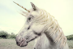 Unicorn. The Real Unicorn, realistic photography stock images