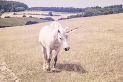 Unicorn walking in nature. And coming to camera royalty free stock photos