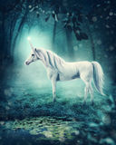 Unicorn. White unicorn in a dark forest royalty free stock photo