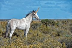 Unicorn white horse Royalty Free Stock Photography