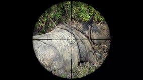 Unicornis de cuernos indios de un rinoceronte del rinoceronte vistos en alcance del rifle del arma Caza de la fauna El escalfar e metrajes