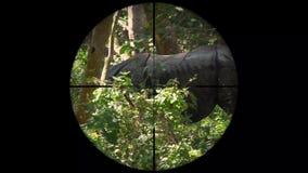 Unicornis de cuernos indios de un rinoceronte del rinoceronte vistos en alcance del rifle del arma Caza de la fauna El escalfar e almacen de video