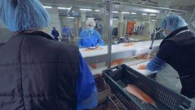 Unidad de la fábrica con los trabajadores de sexo femenino que procesan pescados almacen de video