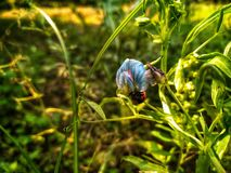Unidad en vida principal: Primavera imagen de archivo libre de regalías