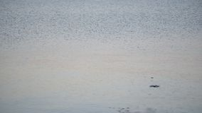 Unidentifiable man skipping stone on water. Silhouette of an unidentifiable man skipping stone on water stock footage