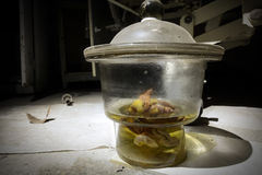 Unidentifiable organ or brain specimen in a glass jar at an abandoned sanatorium. Spooky medical jar containing what looks like a piece of a human brain in an Stock Photo