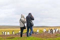 Unidentifiable turister som tar bilder på en Gentoo pingvinkoloni Stanley Falkland Islands royaltyfri foto