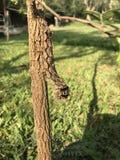Unidentified caterpillar Stock Image